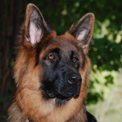 Носителей COVID-19 попробуют выявлять с помощью собак