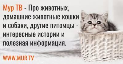Донецкие врачи не смогли спасти истерзанного собакой двухлетнего мальчика