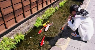 Удивительный город в Японии, где в водосточных каналах плавают прекрасные карпы кои