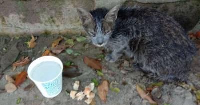 Девушка нашла среди мусора грязную уличную кошку. Её отмыли, и теперь бывшую бродяжку стало не узнать
