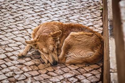 В Пронске бездомные собаки напали на мужчину