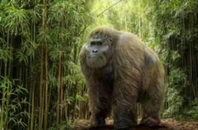 Трёхметровое чудовище периода миоцена: существовал ли Кинг-Конг на самом деле