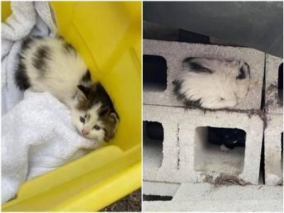 Перепуганная худая кошечка пряталась от людей в бетонном блоке