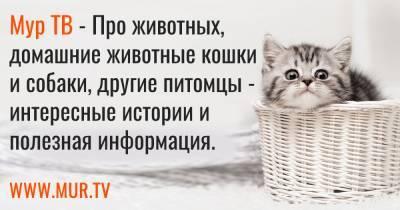 7 котят и щенков, которые ищут дом прямо сейчас